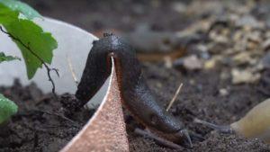 Slug Ignoring Copper Barrier