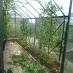 Sorting out Greenhouse