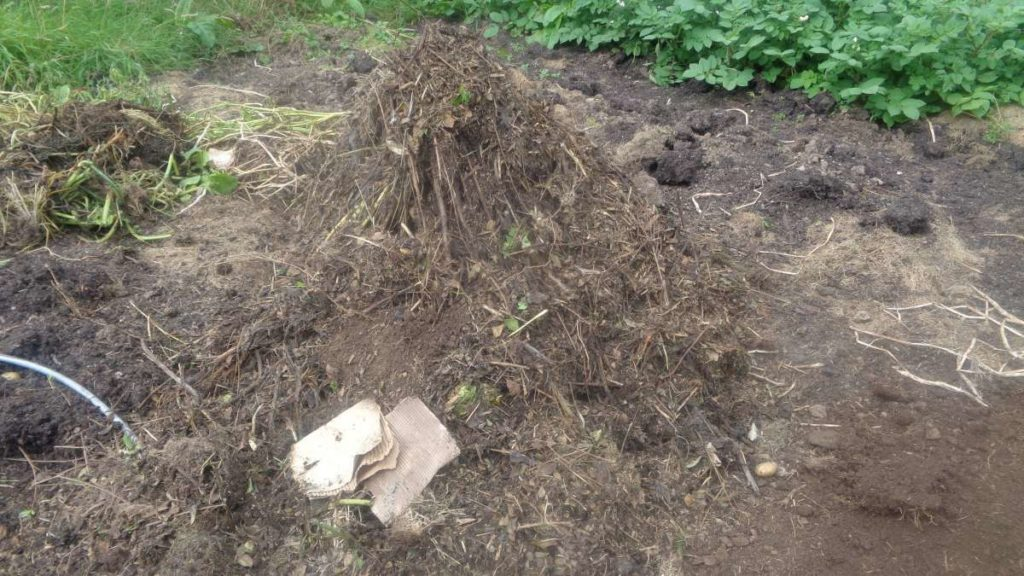 Semi-decomposed Compost