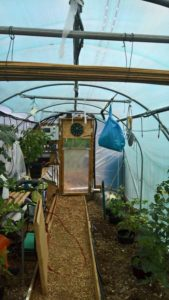View Down the Polytunnel