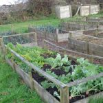 vegetable beds