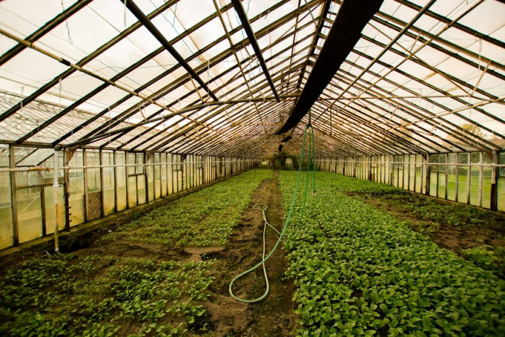 commercial greenhouse