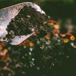 Reinvigorating Your Soil
