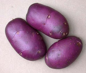 Sarpo Blue Danube Potatoes