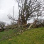 Storm Blown Fallen Tree