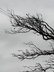 Tree in Power Lines