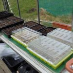 More Sowing, Update