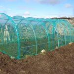 Preparation & Potato Planting