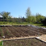 Too dry – very busy on the plot