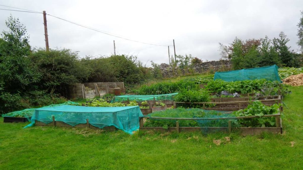 Field with raised beds