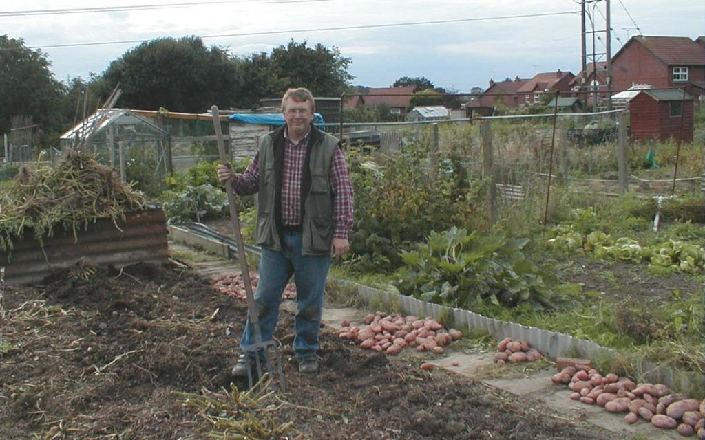 Harvesting Sarpo Mira Potatoes