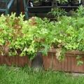 Patio Growing Salad Troughs