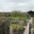 Grand Allotment Tour - Welshmans Lane