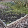 The Salad Bed with Horsetail