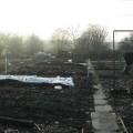 Another shot from the top of the allotment