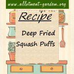 Deep Fried Squash Puffs
