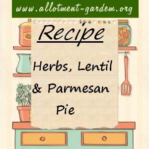 Herbs Lentil Parmesan Pie