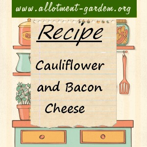 cauliflower and bacon cheese