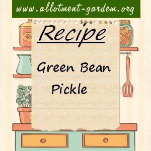 green bean pickle
