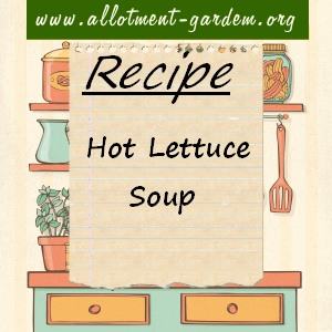 hot lettuce soup