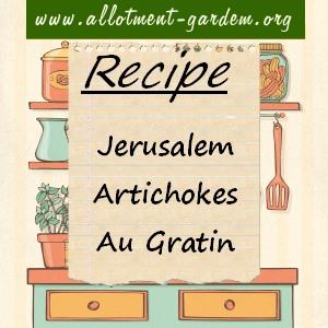 jerusalem artichokes au gratin