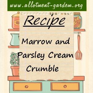 marrow and parsley cream gratin