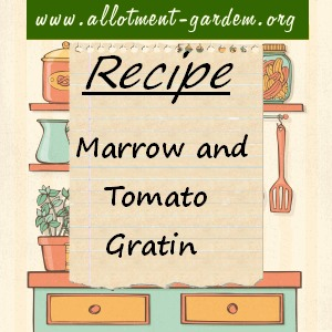marrow and tomato gratin