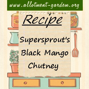 supersprouts black mango