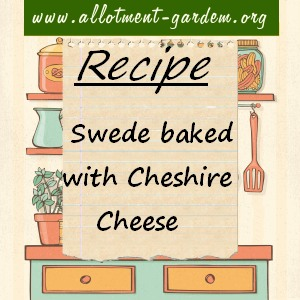 swede baked with cheshire cheese