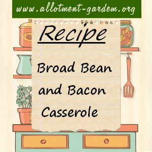 broad bean and bacon casserole
