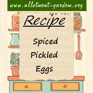 spiced pickled eggs