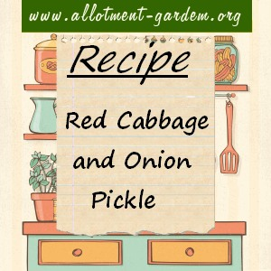 red cabbage and onion pickle