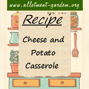 cheese and potato casserole