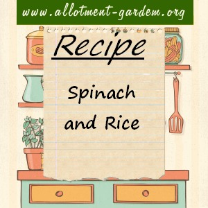spinach and rice