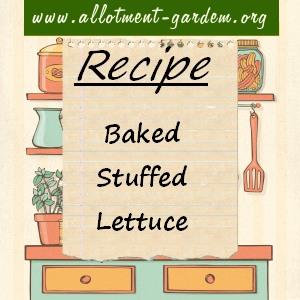baked stuffed lettuce