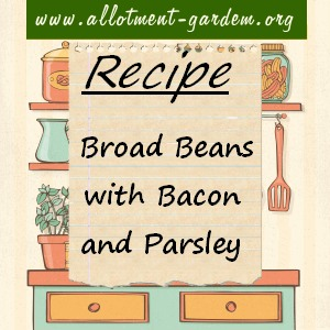 broad beans with bacon and parsley