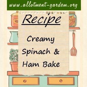 creamy spinach and ham bake