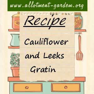 cauliflower and leeks gratin