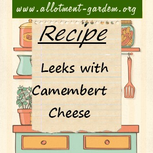 leeks with camembert cheese