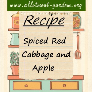 spiced red cabbage and apple