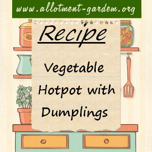 vegetable hotpot with dumplings