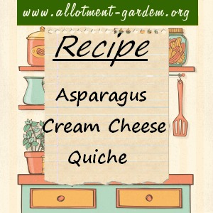 asparagus cream cheese quiche