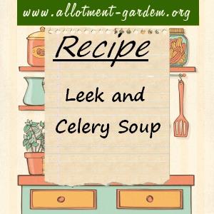 Leek and Celery Soup