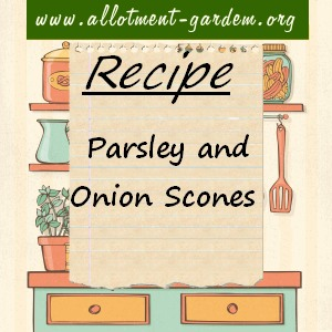 Parsley and Onion Scones