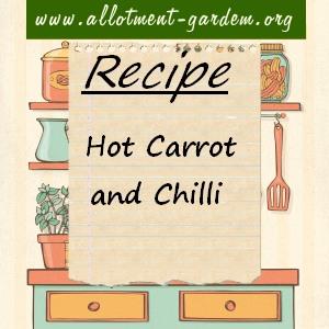 hot carrot