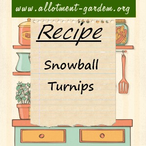 snowball turnips