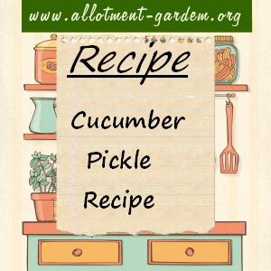 cucumber pickle
