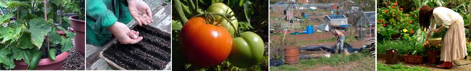 Allotment Garden Recipes