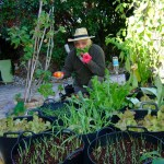 Holistic Healthy Mediterranean Diet Starts in the Garden