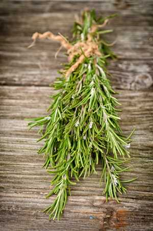 Drying Herbs - Rosemary